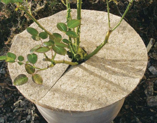 10mm Kokos Mulchscheibe 37cm